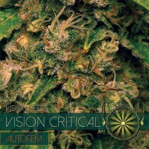 vision seeds auto critical500x500 500x5001