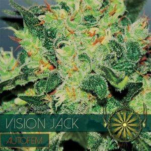 vision-seeds-auto-jack500x500-500x500[1]