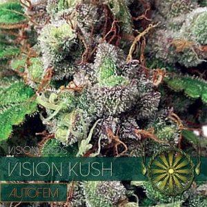 vision-seeds-auto-kush500x500-500x500[1]