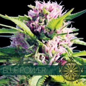 vision-seeds-blue-power-500x500-1-500x500[1]