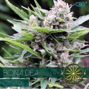 vision-seeds-bona-dea-500x500-1-500x500[1]