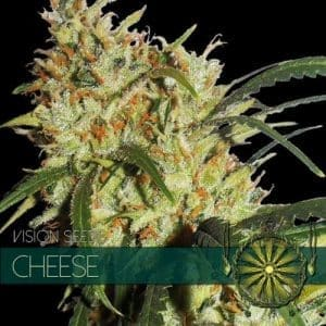 vision-seeds-cheese-500x500-1-500x500[1]