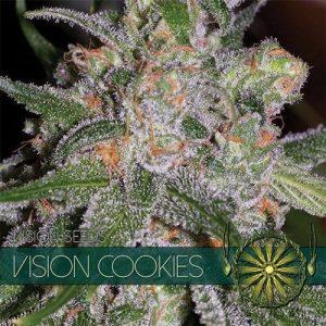 vision-seeds-cookies500x500-500x500[1]