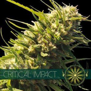 vision-seeds-critical-impact-500x500-1-500x500[1]