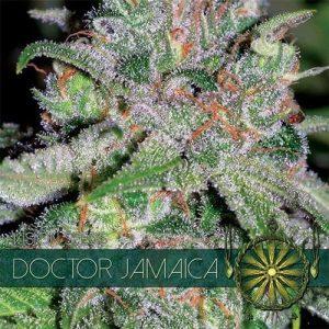 vision-seeds-doc-jamaica500x500-500x500[1]
