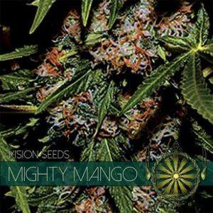 vision-seeds-mighty-mango500x500-500x500[1]