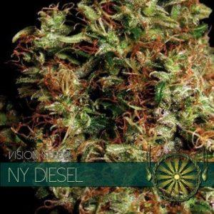 vision-seeds-ny-diesel-500x500-1-500x500[1]