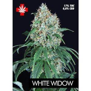 white widow pure seeds 3715 1 1