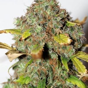 xseedsman-fem_power_africa_41.jpg.pagespeed.ic.Yd5UEAT4Qe[1]
