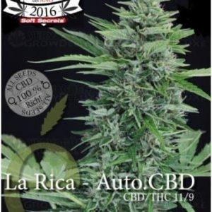 la-rica-auto-cbd-elite-seeds[1]