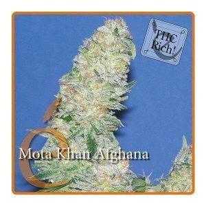 mota khan afghana feminized1