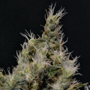 vanilla-500x480[1]