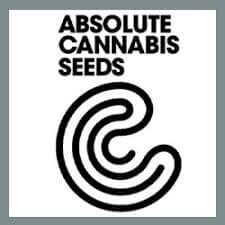 absolute-cannabis-seeds