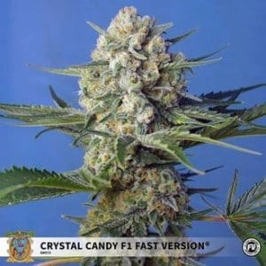 crystal candy f1 fast version feminized
