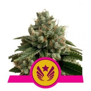 legendary punch feminized