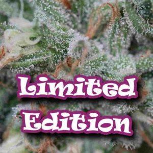 edicion limitada drunderground Easy Resize.com