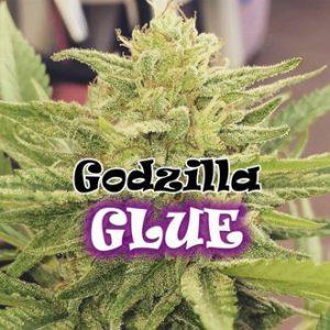 godzilla glue feminized