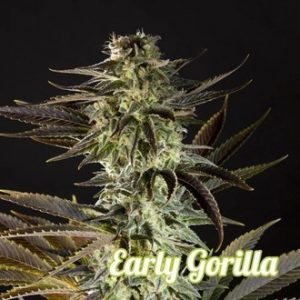 Early Gorilla