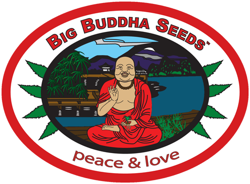 big-buddha-seeds